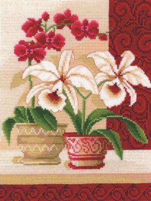 Изящные орхидеи
